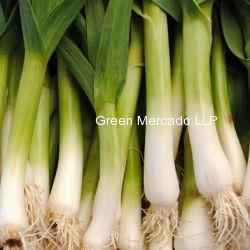 Green garlic (લીલુ લસણ)