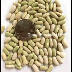 Green Bean Seed (ચોળી ના બી)
