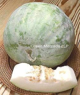 Ash Gourd (પેઠા)