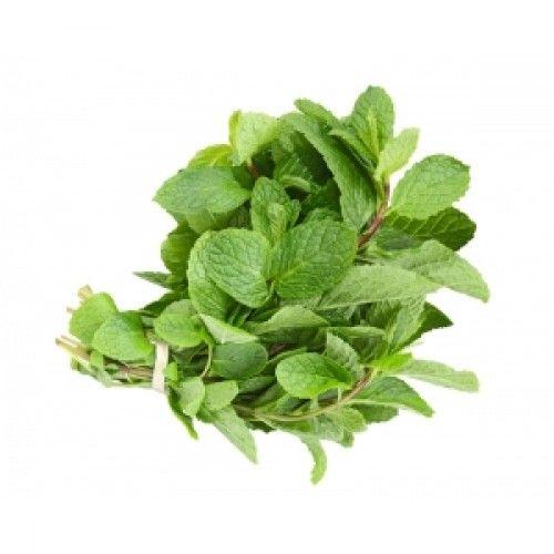 Mint Leaves (ફુદીનો)