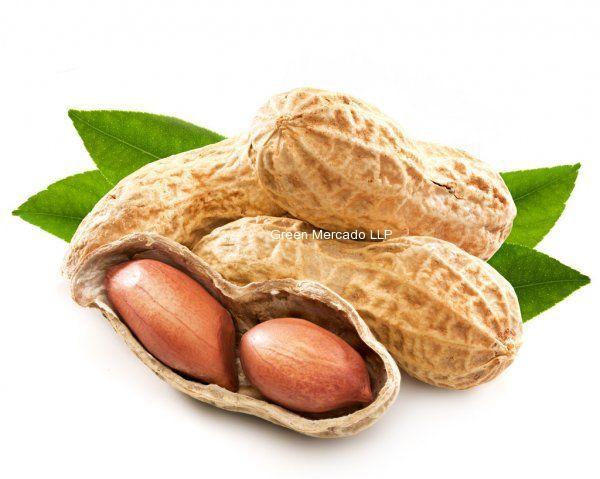 Peanut (મગફળી)