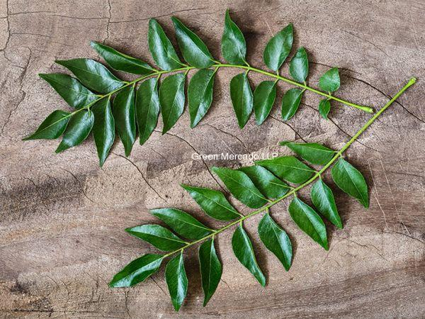 Curry Leaves (લીમડો, કડી પત્તો)