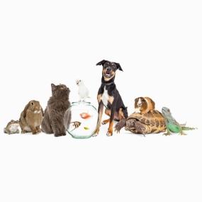 Pet care & Supply